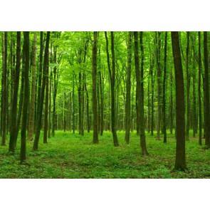 Fotomural Siente el Verde