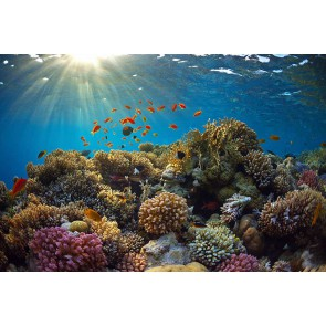 Fotomural  Mundo Submarino