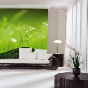 Fotomural Green