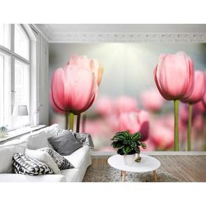Fotomural Tulipanes Rosa