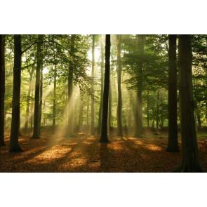 Fotomural bosque al amanecer