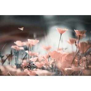 Fotomural amapolas rosas