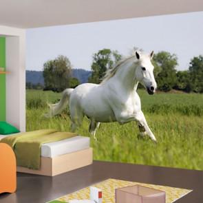 Fotomural caballo blanco