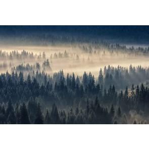 Fotomural Bosque de coníferas