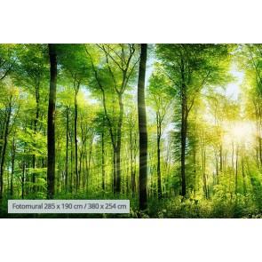 Fotomural el Despertar del Bosque