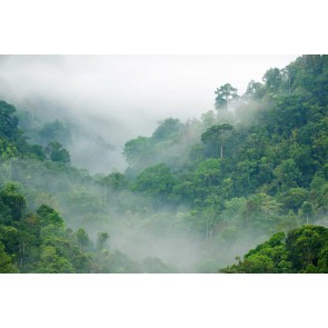 Fotomural Selva tropical en la niebla