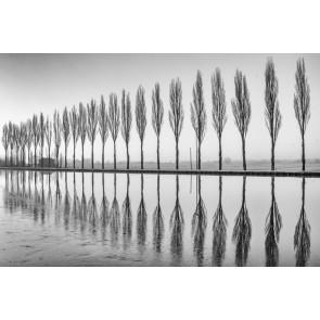 Fotomural Árboles en el lago