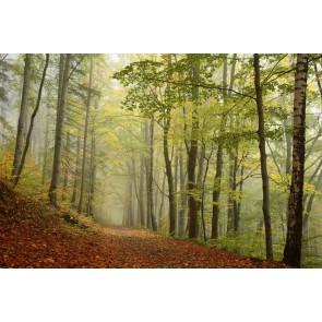 Fotomural niebla en el bosque