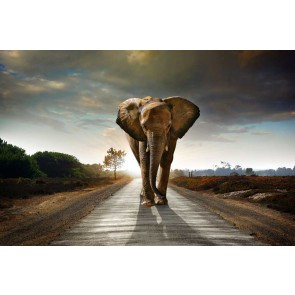 Fotomural elefante caminando