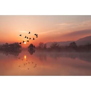 Fotomural pájaros puesta de sol