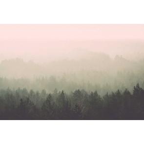 Fotomural bosque en la niebla