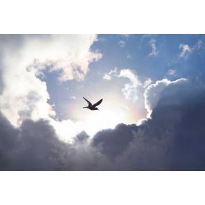 Fotomural nubes
